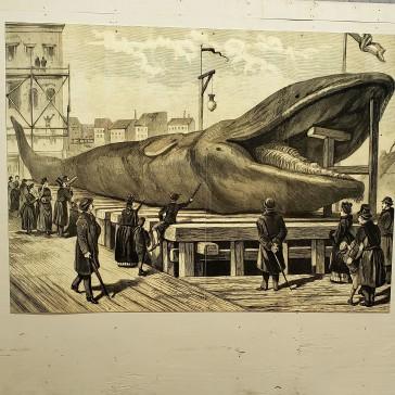 20181001_134309 whale 2 (2)