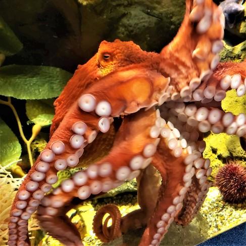 20181008_100820 Octopus (2)