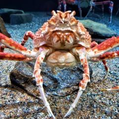 20181008_101224 crab (2)