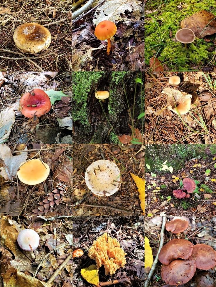 Mushroom Mosaic 10-10-18